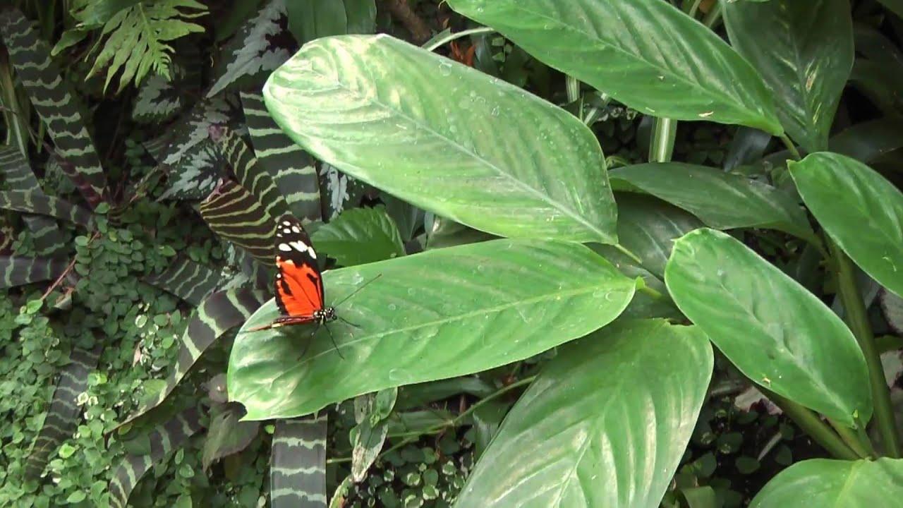 Vlinders aan de Vliet HD Panasonic TM300