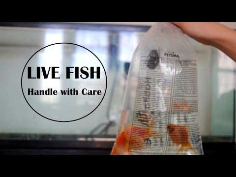 How I Pack Live Fish For Shipping & Big Announcement