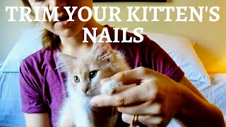 Trimming tiny kitten nails! | How to cut claws on a young kitten, Part 1
