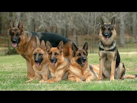 10 อันดับ สายพันธุ์สุนัข ที่ฉลาดที่สุดในโลก สาระแทบไม่มี [P163]