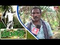 Banana Cultivation | Success Story of East Godavari Farmer | Nela Talli | HMTV