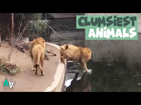 The Clumsiest Animals Ever Compilation | Funny Animal Fails