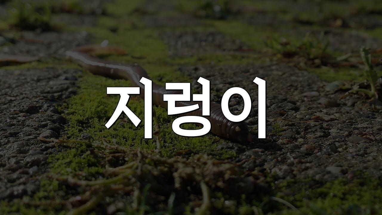 지렁이_27만 구독자분들께 올리는 감사헌정영상