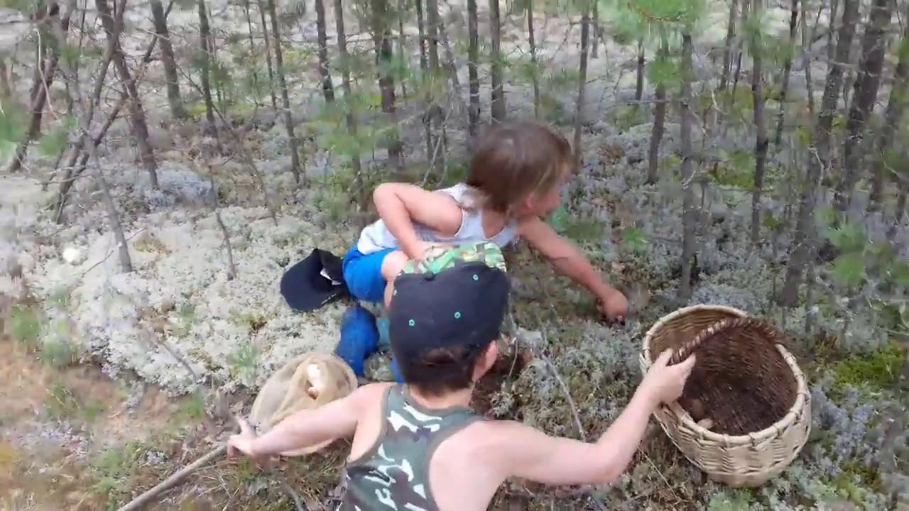 Дети собирают грибы. Сбор грибов в Вологодской. - YouTube
