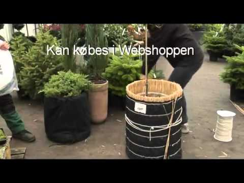 Vinterbeskyttelse af planter - Jespers Planteskole - YouTube