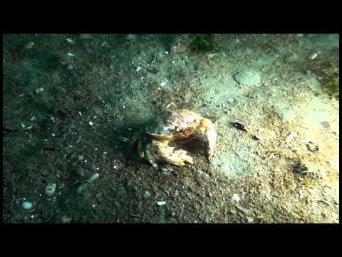 Master Punta Arenas - Patrimonio Submarino Histórico y Natural de Chile