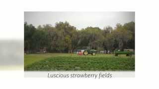 Visit Our U Pick Farm in Lakeland! | Oponay Farms LLC