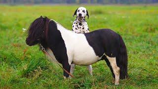 Amazing Pony and Dog Friendship