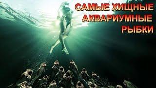 САМЫЕ ХИЩНЫЕ АКВАРИУМНЫЕ РЫБКИ/THE MOST PREDATORY AQUARIUM FISH