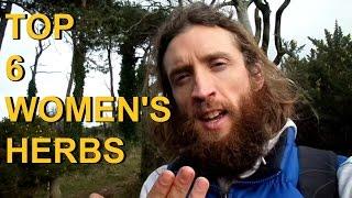 top 6 herbs for menses menopause female hormonal health