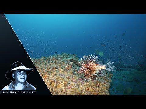 Lionfish Invasion In Florida 01 Footage