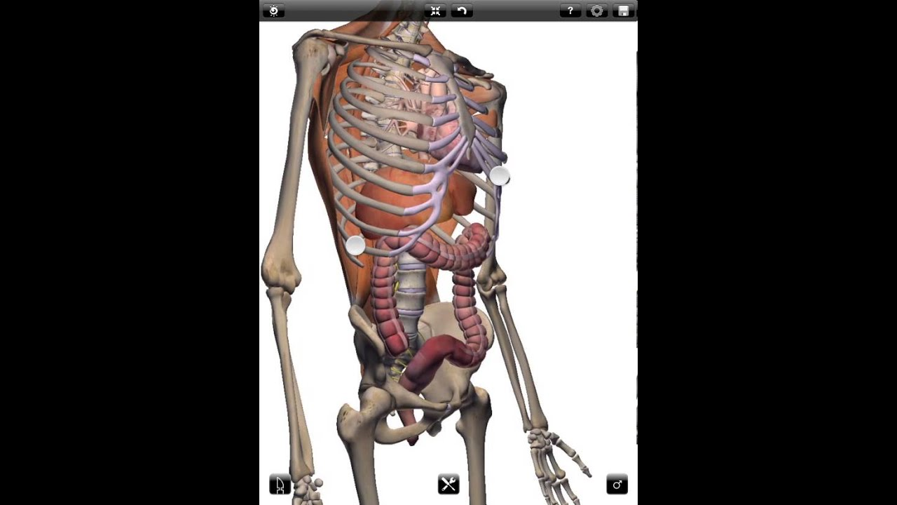 ZYGOTE 3D ANATOMY ATLAS & DISSECTION LAB APP-- Intro - YouTube