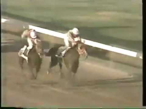 The Viceroy (JAM) - 1992 Jamaica Super Stakes