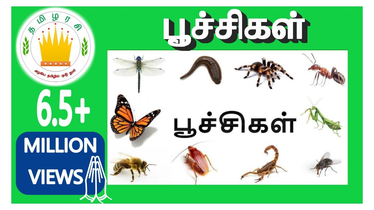 À®ª À®š À®š À®•à®³ À®© À®ª À®¯à®° À®•à®³ Learn Tamil Bugs And Insects Name For Kids Youtube