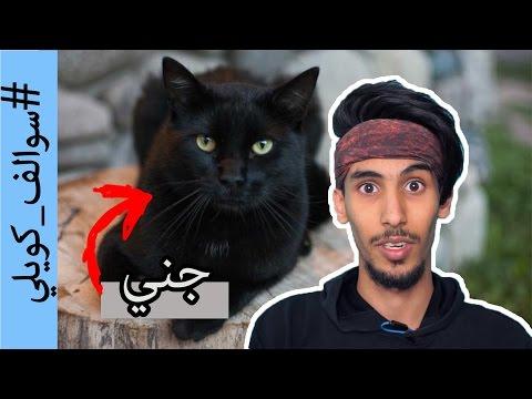 #سوالف_كويلي | القط يشوف المستقبل؟! | حقائق مرعبة عن القطط