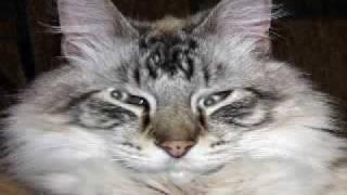stupid wild kitty