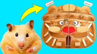 Hamsters Race In The Hamster Maze - Who Will Win?