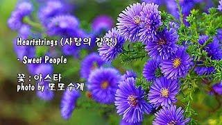 Heartstrings (사랑의 감정)/Sweet People & photo by 모모수계