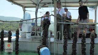 Halkidiki Gastronomy, Halkidiki Tourism Organization official promo video HIGH QUALITY(Halkidiki, Greece, Halkidiki Tourism Organization official promotional video, gastronomy HIGH QUALITY., 2012-11-21T15:31:58.000Z)