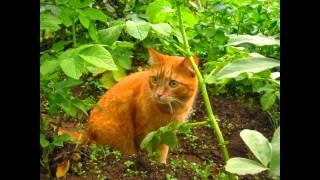 Коты на природе | Cats on the nature