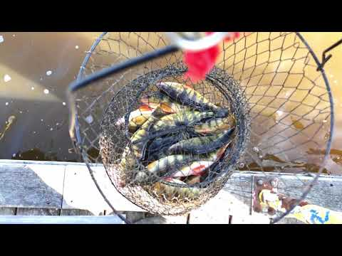 Fishing On A Float For Perch! | Mississippi River