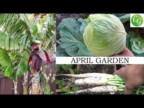 April Garden - Backyard Makeover, Harvests & More!