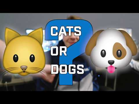 Dallas Fuel's Burning Questions - Cats or Dogs?