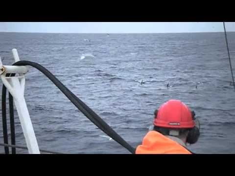 Herring fishing and Killer Whale watching in the Norwegian Sea