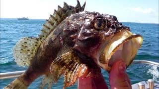 ТОп 10 самых опасных обитателей морей и океанов