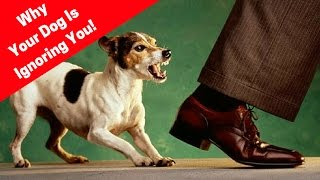 Why Does My Dog Not Listen To Me? Why Dogs Ignore Their Owners!