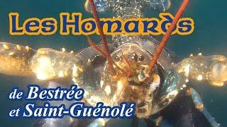 Cinq homards et un bar gavé de sprats - Bestrée et St Guénolé - juin 2015
