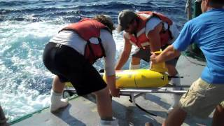 USF Scientists takes samples from Gulf of Mexico