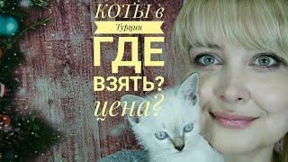 Кошки в Турции - где купить? Сколько стоит котенок? / Про Турцию за две минуты