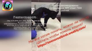 Надежда никогда не умирает Кошка с параличом  нуждается в обследовании help the cat