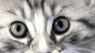 """Слайд-шоу.""""Котята и Щенки"""""""