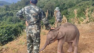 Trapped baby elephant rescued by villagers in SW China