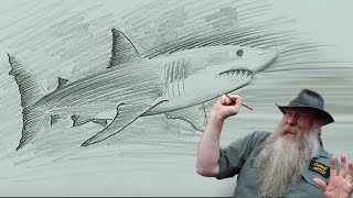 How to Draw a Great White Shark (intermediate)