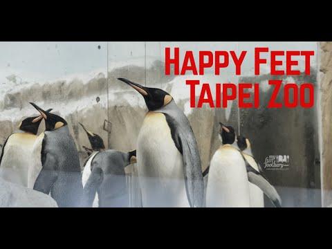 Travel to Taipei Zoo - Taiwan: Yuan Zai Panda, Tiwi Coral Koala + Happy Feet Penguin