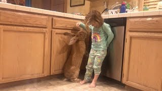 Toddler Best Friends With Giant Rabbit