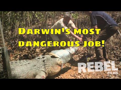 Darwin's Most Dangerous Job!