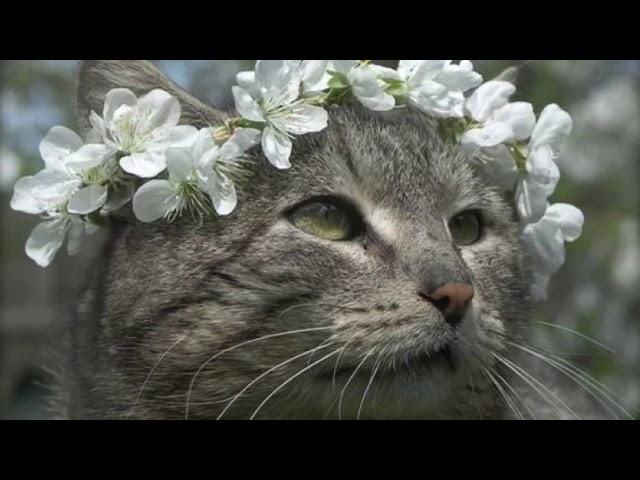 Изображение предпросмотра прочтения – АнастасияВолкова читает произведение «Придет весна» М.И.Цветаевой