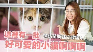 這裡有一批好可愛的小貓啊啊啊!探訪苗栗縣立收容所【好味貓旅行】EP4
