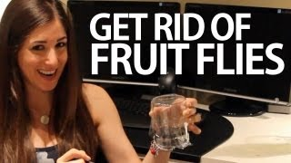How to Get Rid of Fruit Flies (Easy Household Cleaning Ideas) Clean My Space