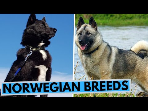 All Norwegian Dog Breeds List
