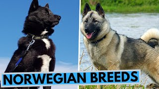 All Norwegian Dog Breeds List