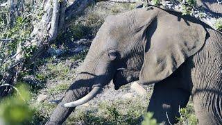 Knysna Elephant Park - Between Knysna & Plettenberg Bay, South Africa