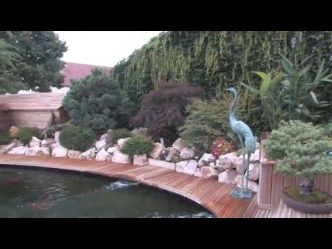 Le bassin à koi de Jean Luc