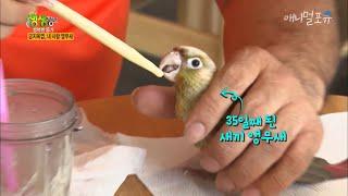 앵무새 키우시는 분들이 보면 놀랄 수 밖에 없는 역대급…