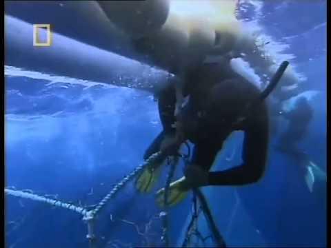 Tuna Cowboys   National Geographic Documentary