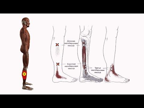 Болит нога ниже лодыжки